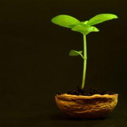 стимуляторы роста и корнеобразования